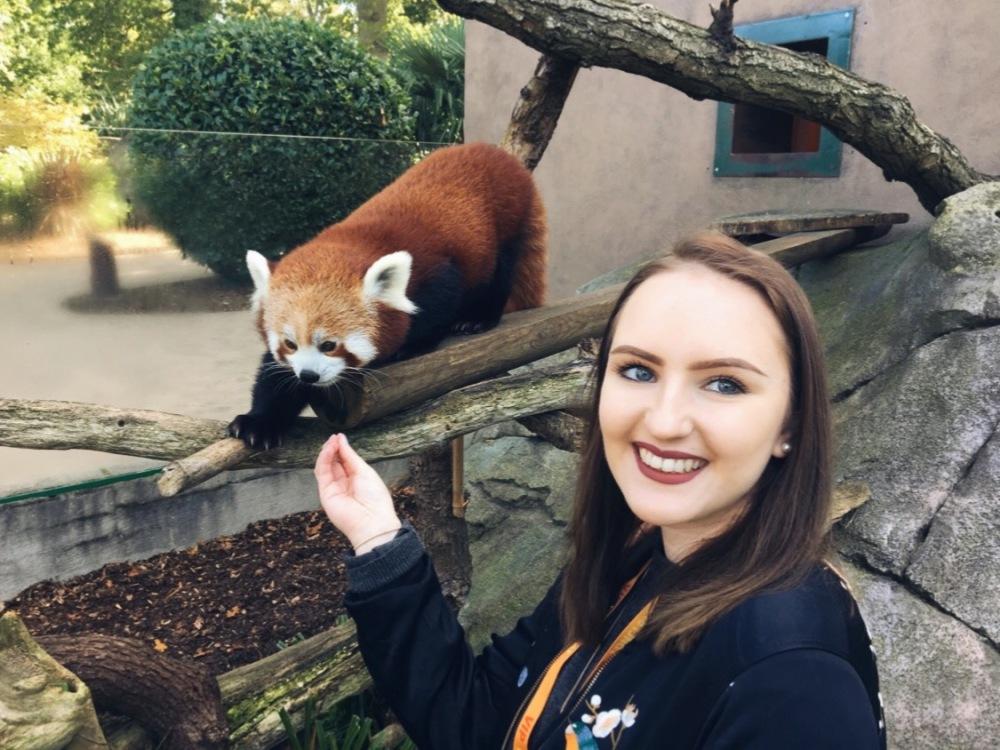 feeding the red pandas at longleat safari park