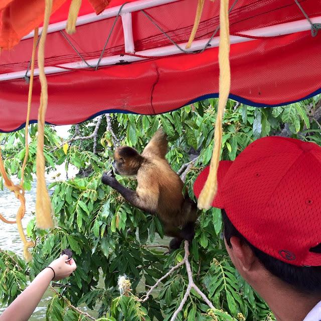Feeding Oreos to wild monkeys on Lake Nicaragua